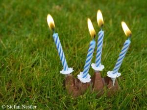 Geburtstag blog 2014