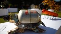 Schildkröte mit Gaskanister-Panzer