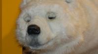 Der freundliche Eisbär