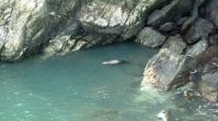 Robbe im Wasser