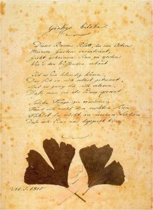 Manuscrito de Goethe com folhas da nogueira-do-japão
