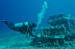 "Felicity ""Flik"" Finlayson working underwater on a new artificial reef"