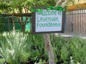 Lavender Foundation sign