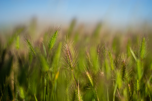 close-up at wild grass