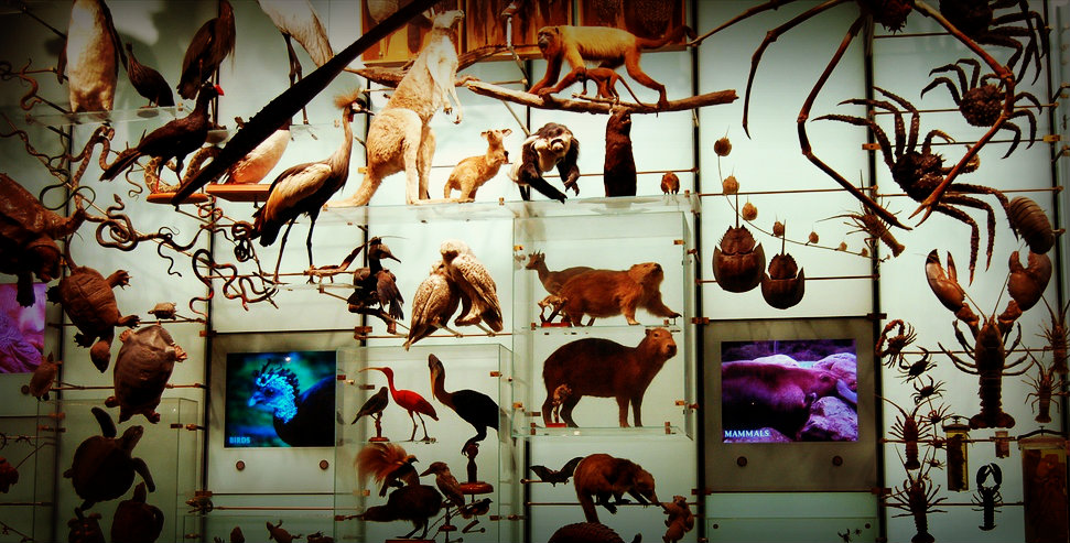 Biodiversity in the museum - but there are more connections between culture and nature...
