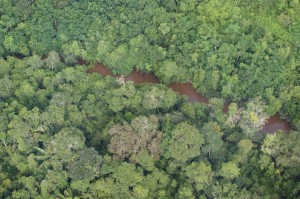 Photo: Aerial view of the rain forest in Amazonia