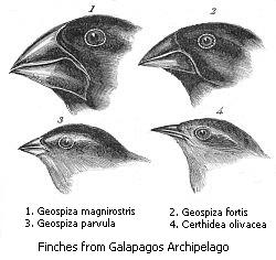Public domain: Charles Darwin