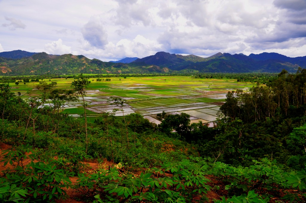 Rice field in the north-east of Madagascar during rainy season