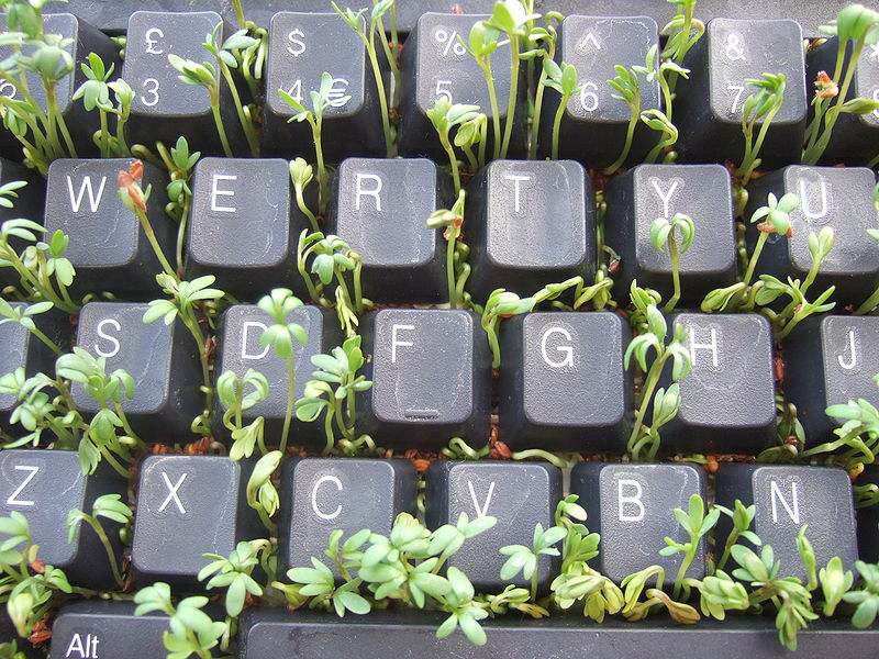 Cress growing between keys of a keyboard