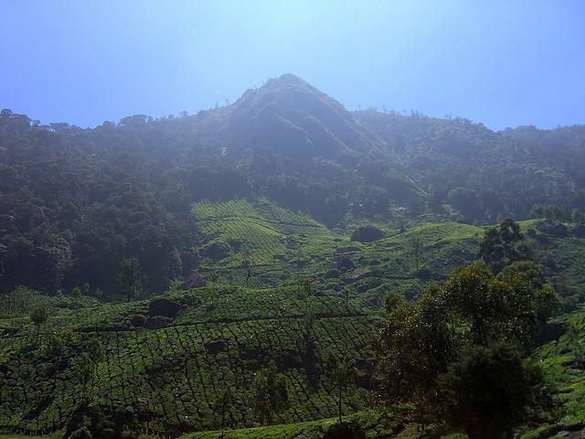 cc by nc sa pocketdora western ghats