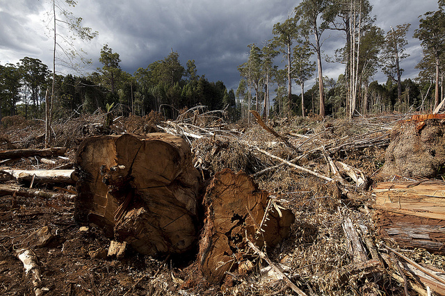 Picture from February 2012: A  logging site close to the Tasmanian Wilderness World Heritage Area.  (Photo credit: CC BY NC SA 2.0: Ta Ann Truths)