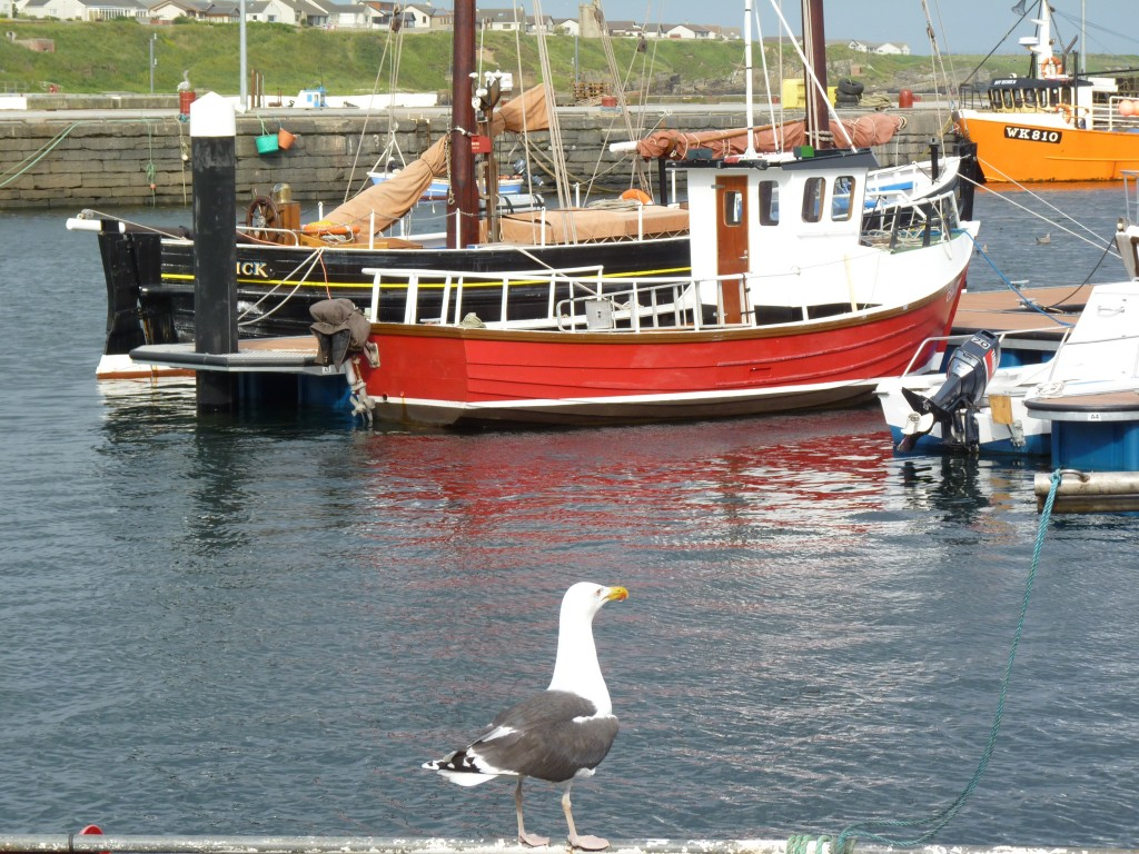 Wick harbour