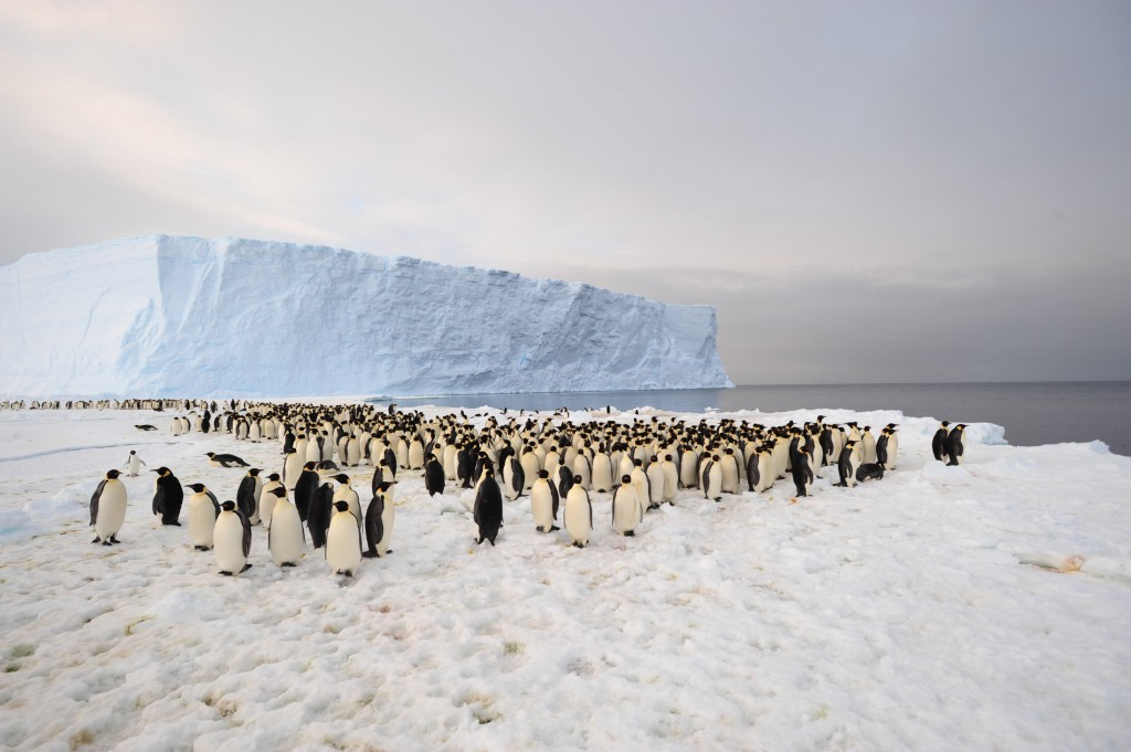 Penguins galore, Thanks to the International Polar Foundation for the pic from Antarctica, December 2012,