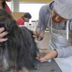 Michael Wigge kämmt einen Hund